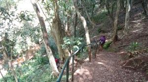 Karura Forest Photos